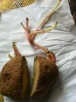 patata_orto47_primavera2012
